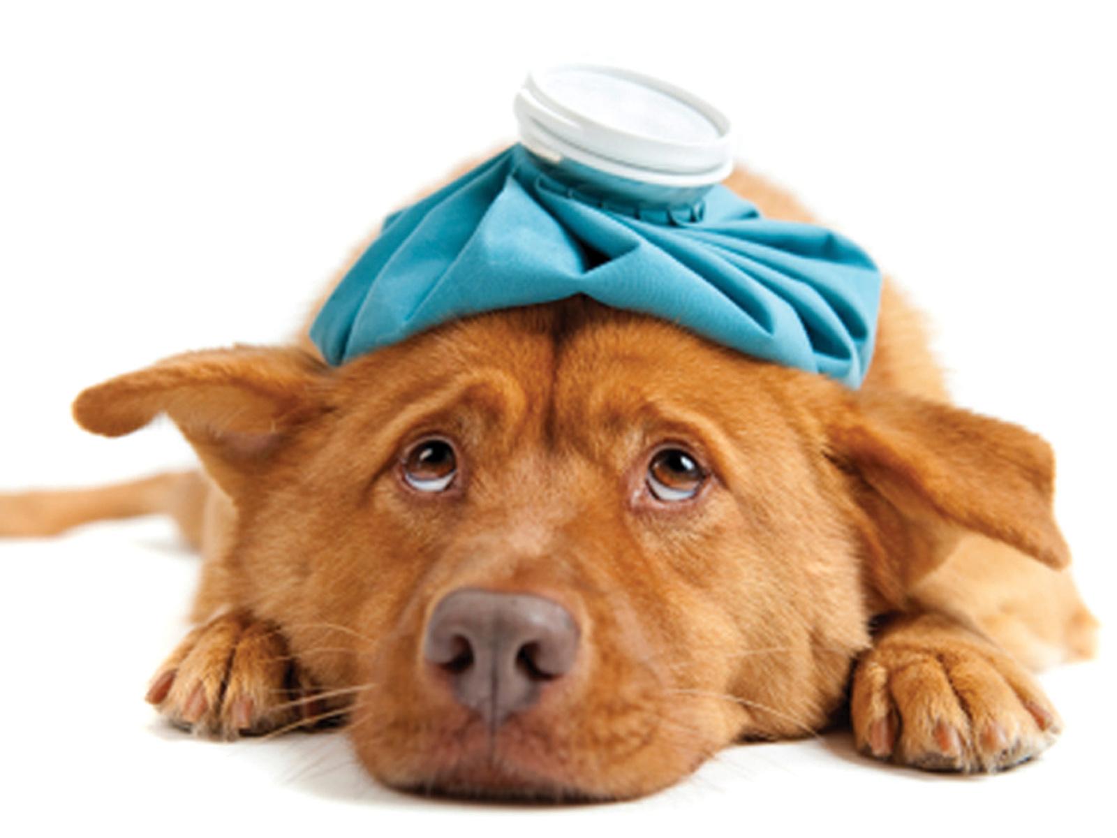 Állatorvosi helyettesítés